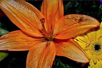 SanFran-flowers12