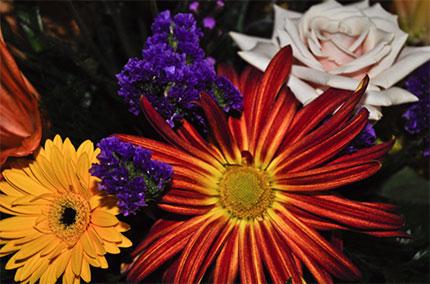 SanFran-flowers13