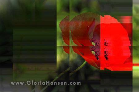 Hansen-Poppy-04