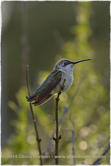 Bird-August2014