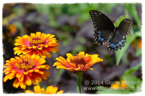 Butterfly-August2014