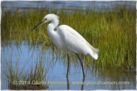 gloria-bird1-setp2014