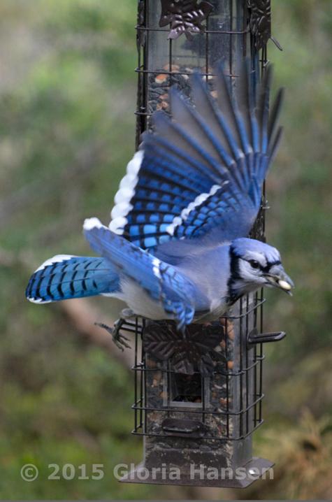 2015-BirdB
