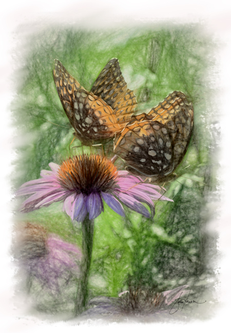 butterflies_art_Hansen