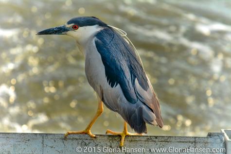 Bird-Hansen-August2015