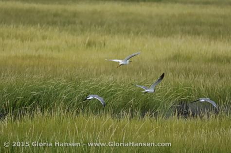 Hansen-Gloria-August2015-3