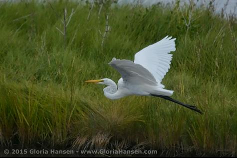 Hansen-Gloria-August2015-4