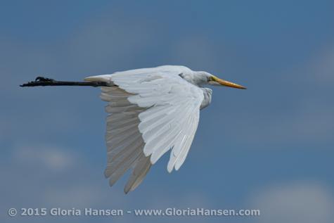 Hansen-Gloria-August2015-5